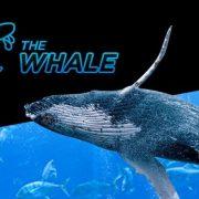 Гарантию призового фонда в Baby Whale увеличат в 2017